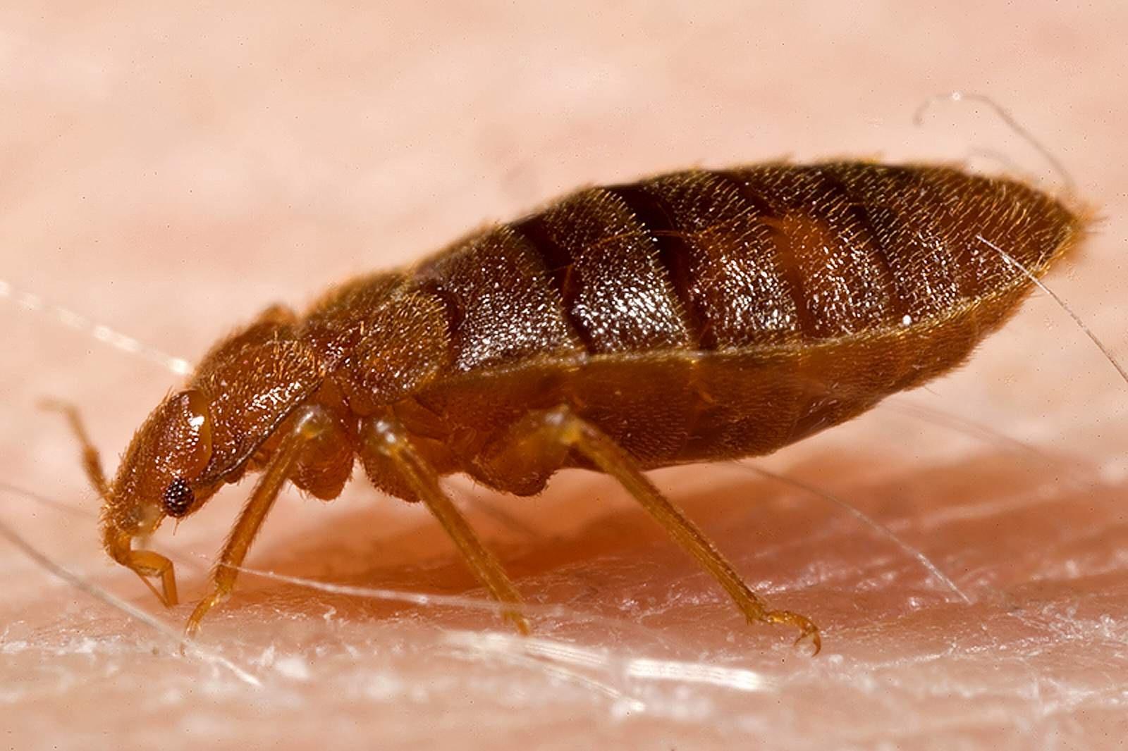 Got Bedbugs The Co2 Bedbug Trap