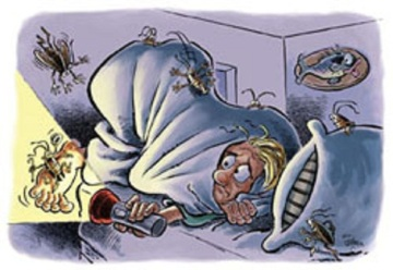 # bedbugs at night